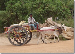 Typical Bullock Cart