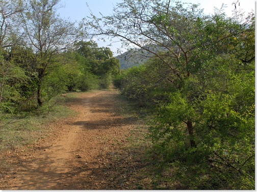 Trail to Pradakshina Path